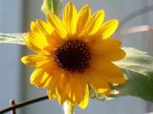 remembering summer sun 4